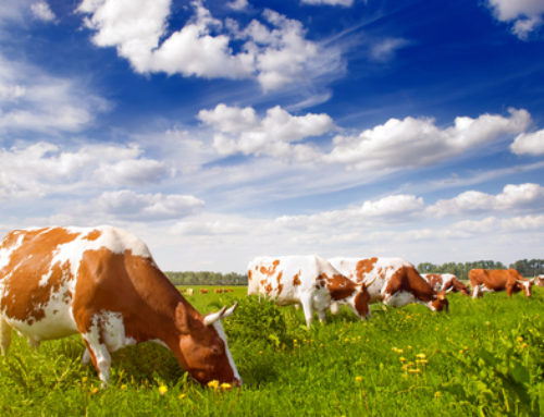 Healthy Diet Programs Can Include Grass-Fed Beef