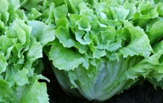 diet programs include low calorie nutritious recipes escarole