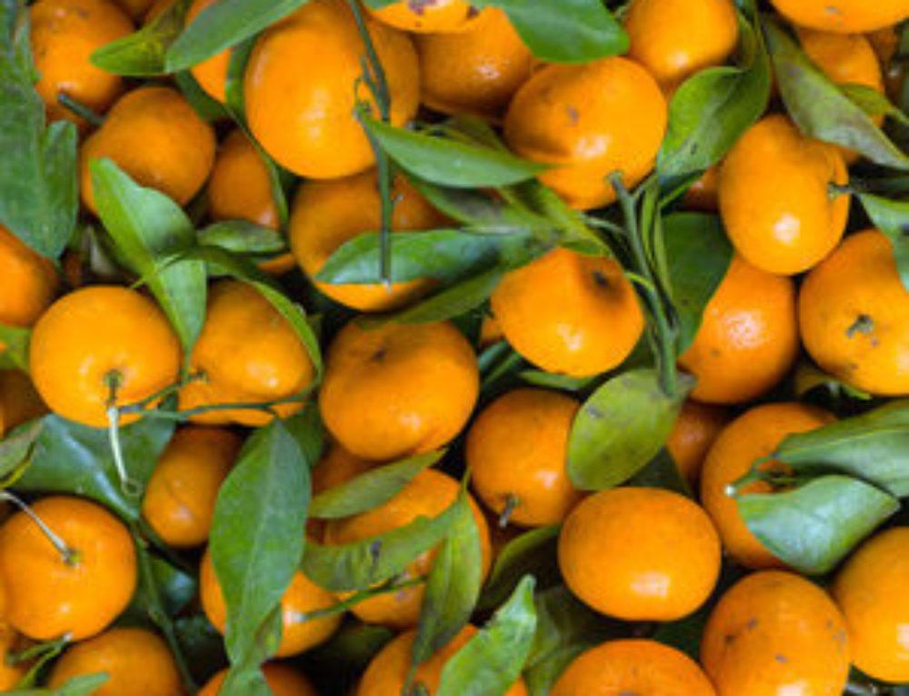 Diet Programs Should Include Health Snacks Like Fruit