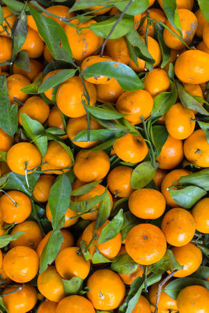 diet programs should include fruit